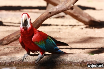 12 Parque das aves