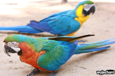 14 Parque das aves