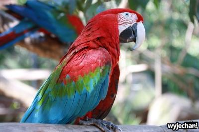 15 Parque das aves
