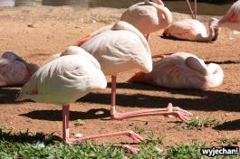 02 Parque das aves