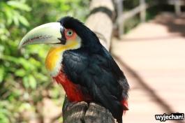 06 Parque das aves