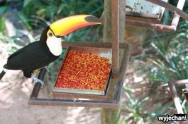 08 Parque das aves