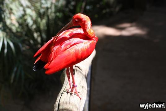 09 Parque das aves