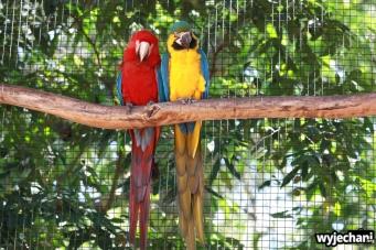 10 Parque das aves