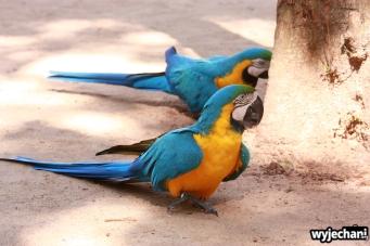 11 Parque das aves