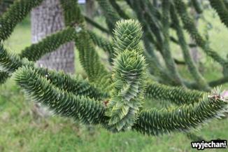 01 Ensenada okolice dziwne drzewo