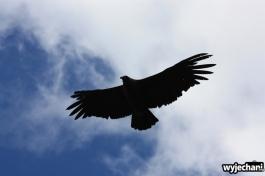 02 ptaki