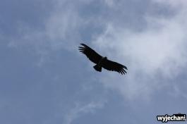03 ptaki
