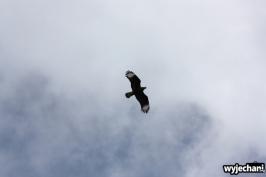 04 ptaki