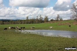07 Villarrica okolice pastwisko