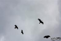 08 ptaki - taniec