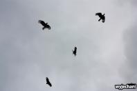 09 ptaki - taniec