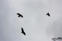10 ptaki - taniec