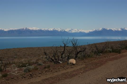 01 po drugiej stronie jeziora Lago Argentino