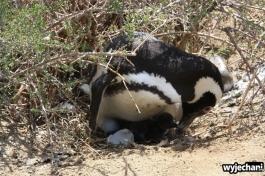 02 PN Monte Leon - pingwiny