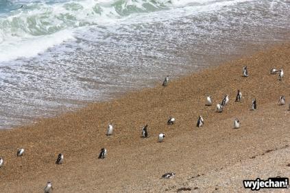 04 PN Monte Leon - pingwiny