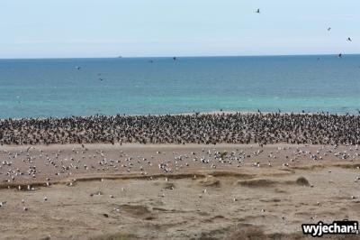 08 PN Monte Leon - wyspa ptakow