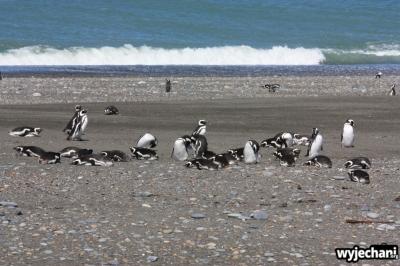 11 Cabo Virgenes - pingwiny