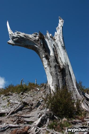 27 Carretera Austral, cz3 - wulkan Chaiten - krajobraz po erupcji