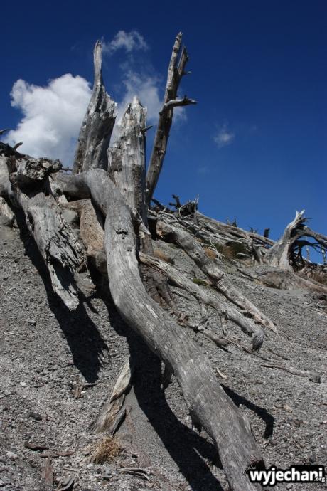 28 Carretera Austral, cz3 - wulkan Chaiten - krajobraz po erupcji
