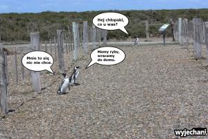 01 Cabo Virgenes - pingwiny - fotostory 1