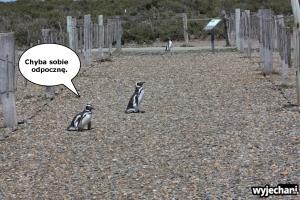 02 Cabo Virgenes - pingwiny - fotostory 2
