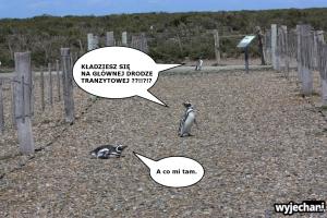 03 Cabo Virgenes - pingwiny - fotostory 3