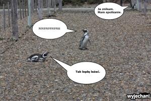 04 Cabo Virgenes - pingwiny - fotostory 4