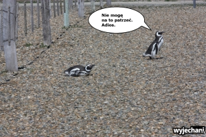 05 Cabo Virgenes - pingwiny - fotostory 5