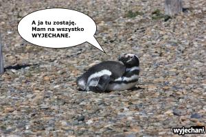 06 Cabo Virgenes - pingwiny - fotostory 6