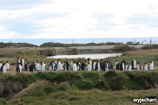 01 Parque Pinguino Rey