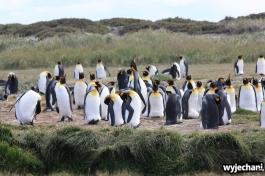02 Parque Pinguino Rey