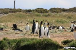 03 Parque Pinguino Rey