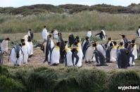 04 Parque Pinguino Rey