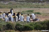 05 Parque Pinguino Rey