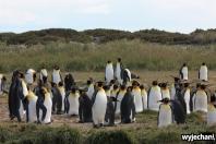 06 Parque Pinguino Rey