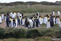 07 Parque Pinguino Rey