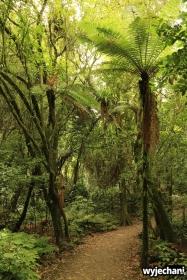 03 Waitomo - Marokopa Falls