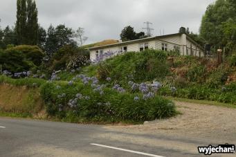 06 Taranaki - Forgotten World Highway - domek