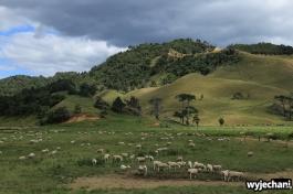 13 Waitomo - okolice Ngarupupu Point