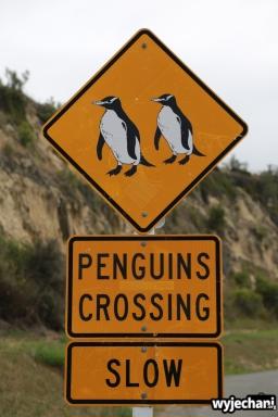 01 Pingwiny - znak drogowy