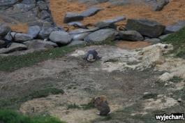 06 Pingwiny - Katiki Point