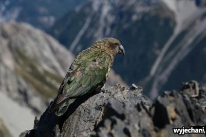 22 Arthur's Pass - Avalanche Peak
