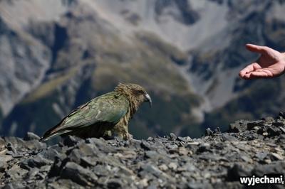 23 Arthur's Pass - Avalanche Peak