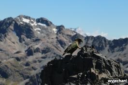 24 Arthur's Pass - Avalanche Peak