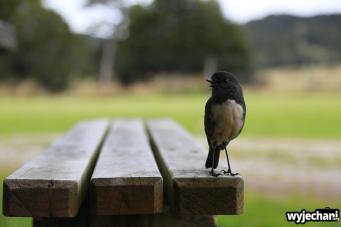 03 PN Fiordland - Robin