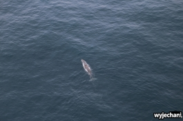 05 Kaikoura - wieloryb