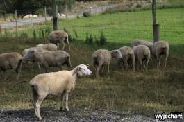 06 PN Fiordland