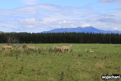 08 PN Fiordland