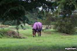 15 Queenstown - kon w ubraniu